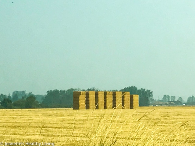 Lots of hay stacks on the way to Silver Falls