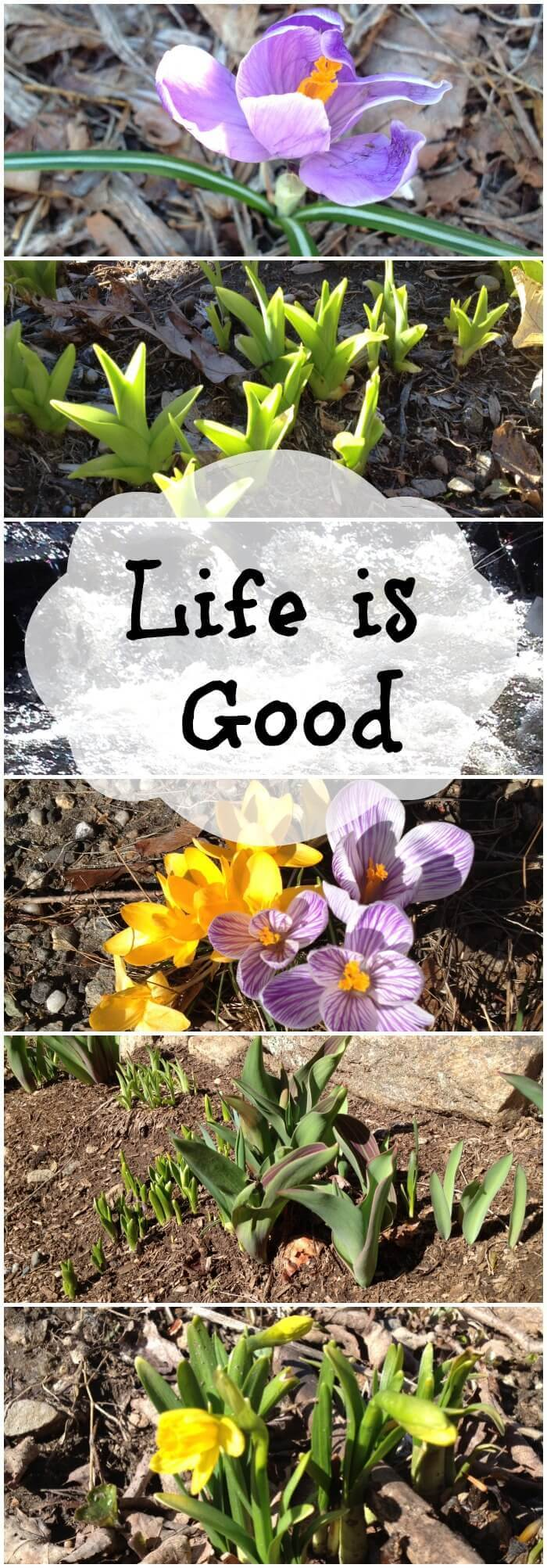 Life Is Good - Happy Spring!