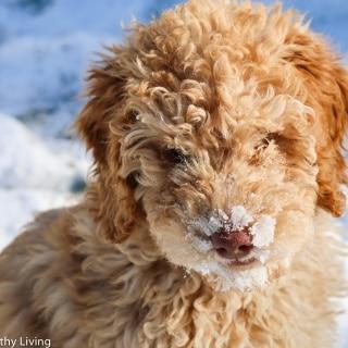 Puppy Love #1