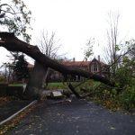 Hurricane Sandy Damage - Waveny House